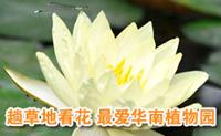 趟草地看花 最爱华南植物园