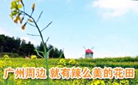 广州附近 就有辣么美的花田